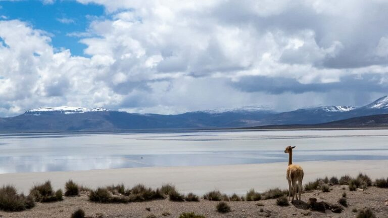BEST TIME TO VISIT CHILE: MONTH-BY-MONTH GUIDE